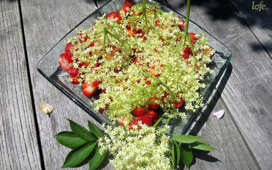 Erbeeren & Holunderblüten
